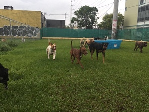 Best Dog Daycare In Miami