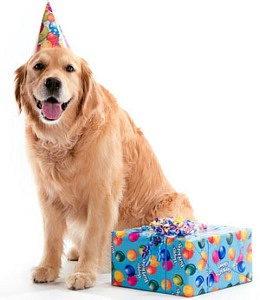 Have Your Dogs Birthday Party At The Best Dog Day Care In Miami!